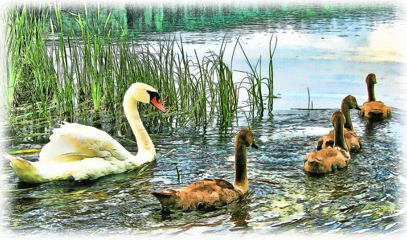 """""""Spring Ducklings"""" by Tom Schmidt, watercolor, 2012."""
