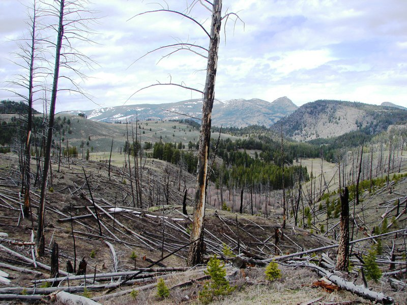 Fire damage in Yellowstone.