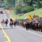 Cowboys rounding up cattle on Two Dot Ranch land. (Photo: Wyoming Tourism)