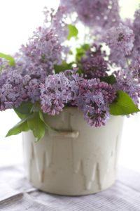 Lilacs (Photo: Matthew Mead)