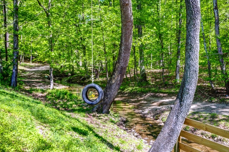 Tire swing in the woods.