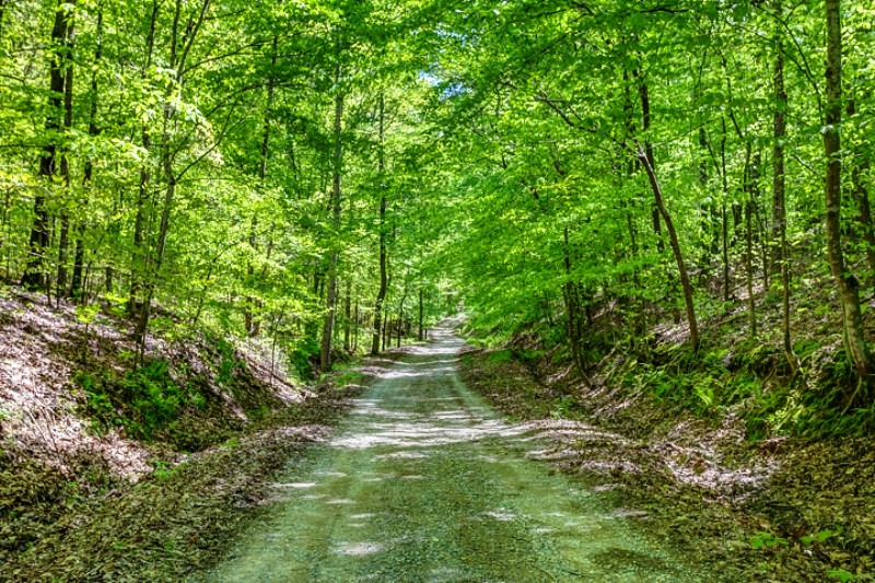 Road through the secluded woods.