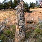 The Petrified Tree, 2003. (Photo: Ildar Sagdejev)