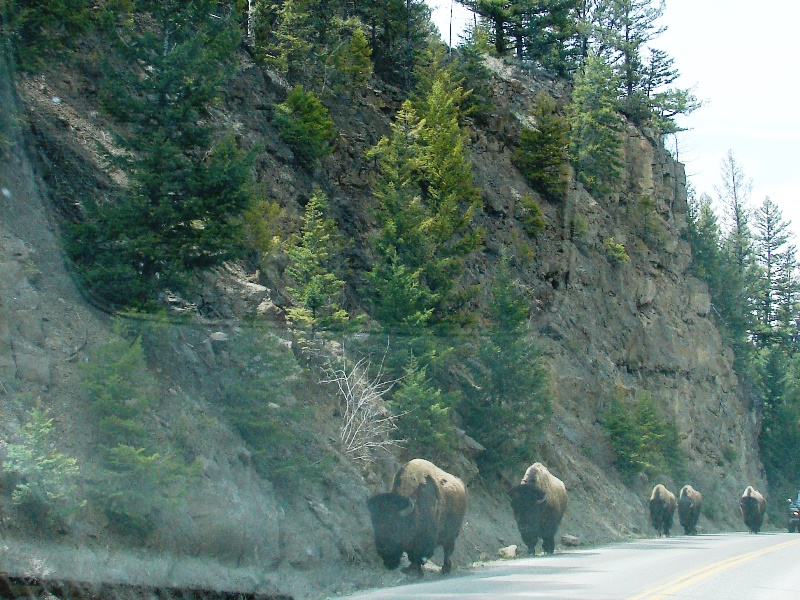 Right around the corner from Undine Falls, look who we met up with on the road.