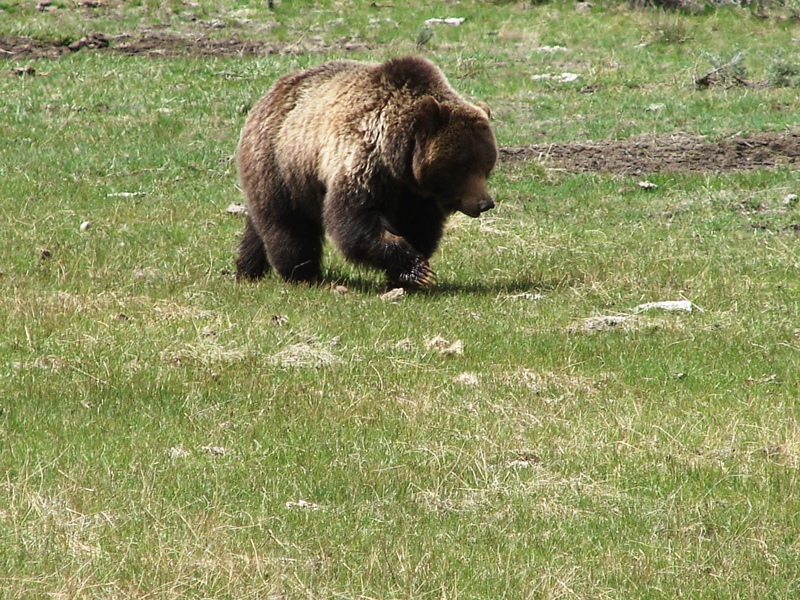 Using zoom for a closeup of the bear.