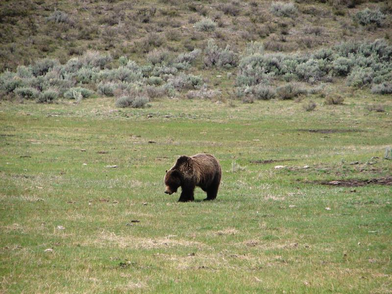 Our first bear sighting.