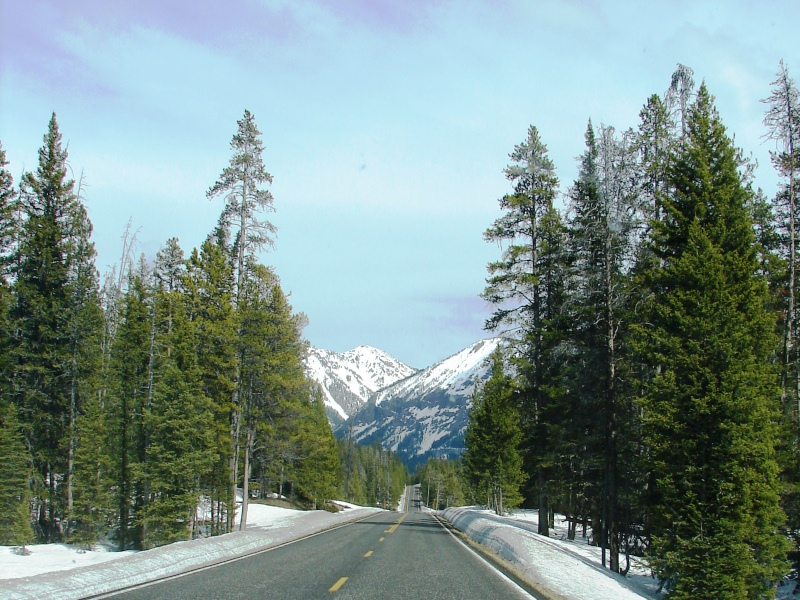 Snow all around as we head for Yellowstone's Northeast Entrance.