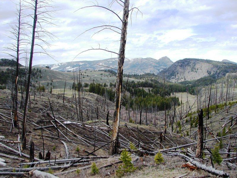 Fire damage in Yellowstone.