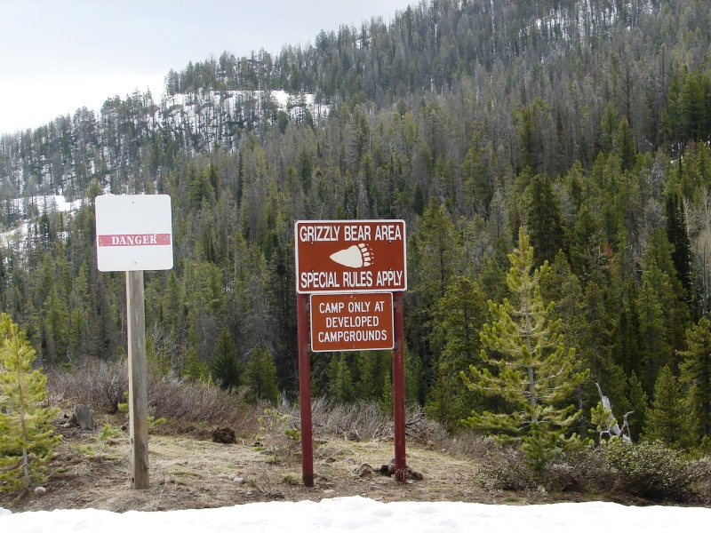 Bear warning signs . . . and snow . . . near the entrance to Yellowstone.