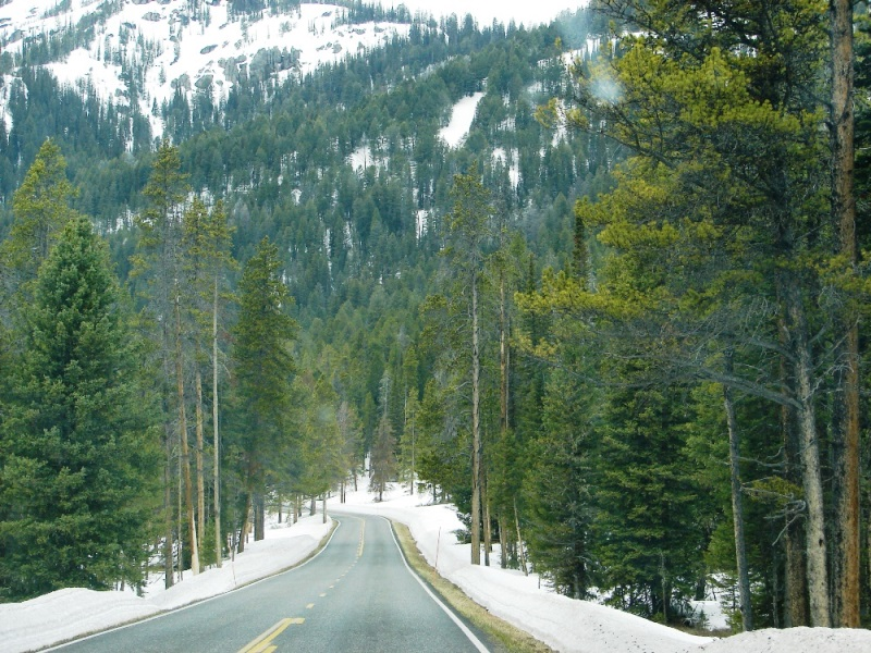 Forest trees and mountains rise above the road to form a canyon.